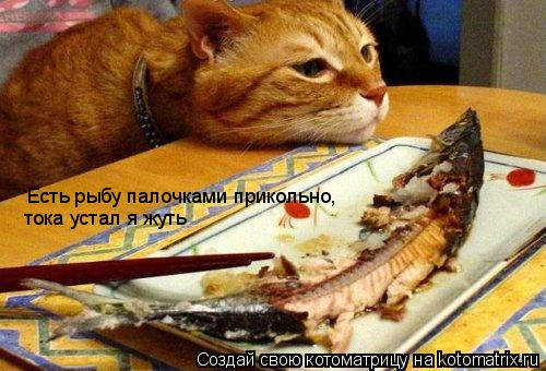 Котоматрица: Есть рыбу палочками прикольно, тока устал я жуть