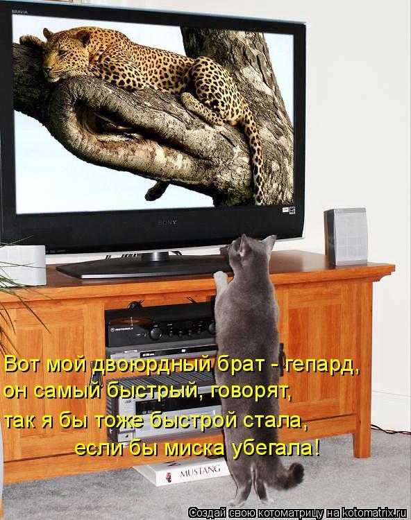 Котоматрица: Вот мой двоюрдный брат - гепард, он самый быстрый, говорят, так я бы тоже быстрой стала, если бы миска убегала!