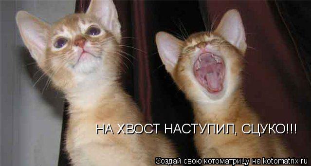 Котоматрица: НА ХВОСТ НАСТУПИЛ, СЦУКО!!!