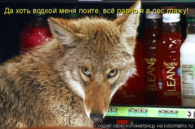 Котоматрица: Да хоть водкой меня поите, всё равно я в лес гляжу!