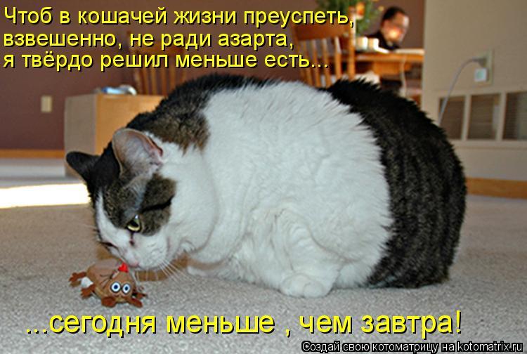 Котоматрица: Чтоб в кошачей жизни преуспеть, я твёрдо решил меньше есть... ...сегодня меньше , чем завтра! взвешенно, не ради азарта,