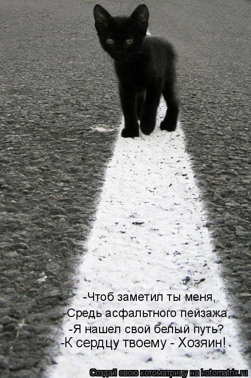Котоматрица: -Чтоб заметил ты меня, -Средь асфальтного пейзажа, -Я нашел свой белый путь?  -К сердцу твоему - Хозяин!