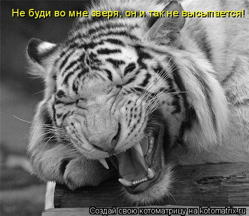 Котоматрица: Не буди во мне зверя, он и так не высыпается!