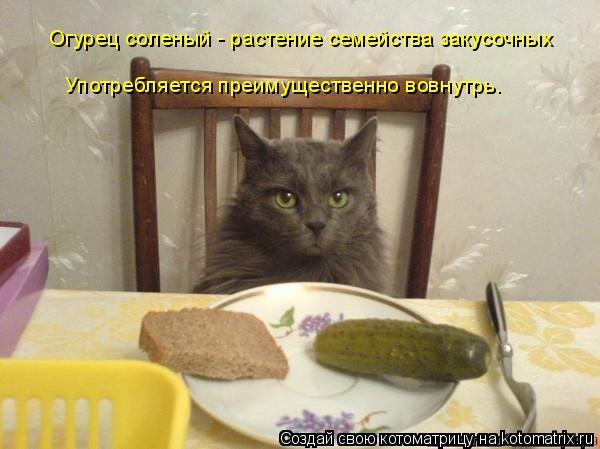 Котоматрица: Огурец соленый - растение семейства закусочных Употребляется преимущественно вовнутрь.