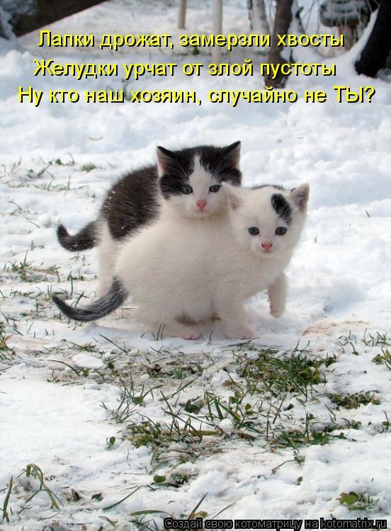 Котоматрица: Лапки дрожат, замерзли хвосты Желудки урчат от злой пустоты Ну кто наш хозяин, случайно не ТЫ?