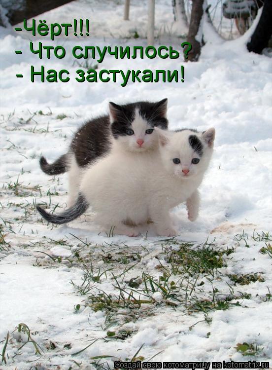 http://kotomatrix.ru/images/lolz/2009/08/13/339916.jpg