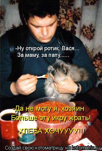 Котоматрица: -Ну открой ротик, Вася... За маму, за папу...... -Да не могу я, хозяин Больше эту икру жрать! ХЛЕБА ХОЧУУУУ!!!