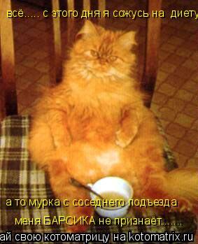 Котоматрица: всё..... с этого дня я сожусь на  диету, а то мурка с соседнего подъезда меня БАРСИКА не признаёт.......