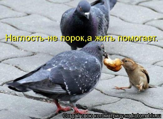 Котоматрица: Наглость-не порок,а жить помогает.