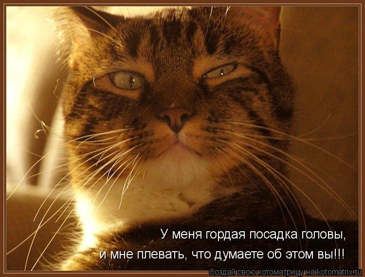 Котоматрица: У меня гордая посадка головы, и мне плевать, что думаете об этом вы!!!