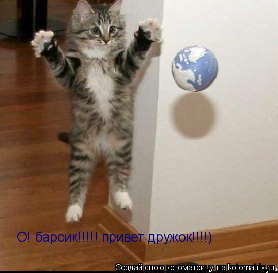 Котоматрица: О! барсик!!!!! привет дружок!!!!)