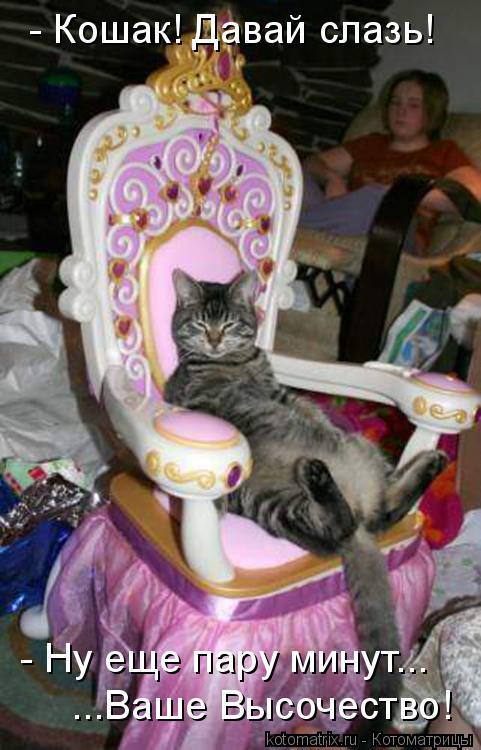 Котоматрица: - Кошак! Давай слазь! - Ну еще пару минут... ...Ваше Высочество!