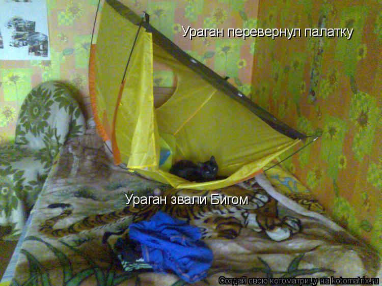 Котоматрица: Ураган перевернул палатку Ураган звали Бигом
