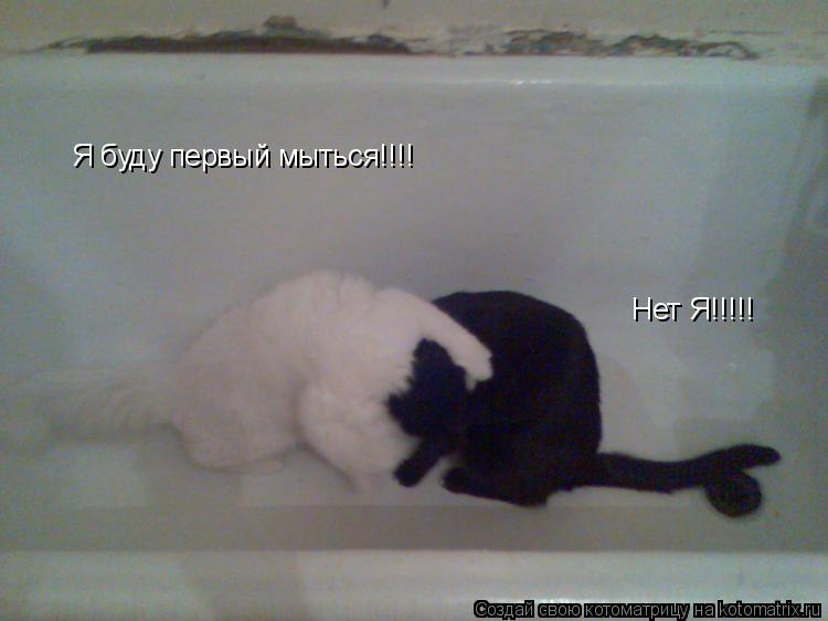 Котоматрица: Я буду первый мыться!!!! Нет Я!!!!!
