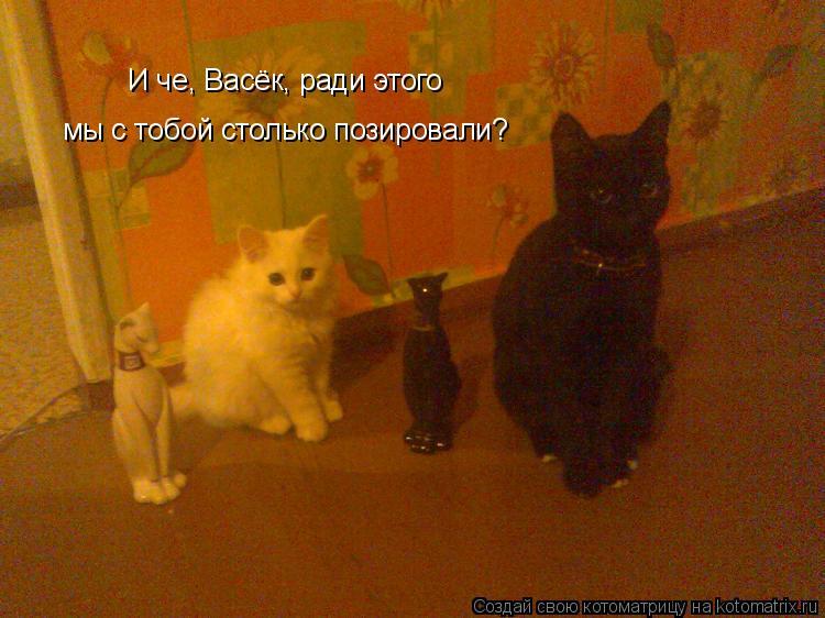 Котоматрица: И че, Васёк, ради этого  мы с тобой столько позировали?