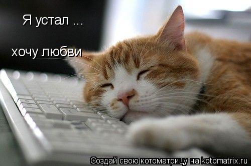 Котоматрица: Я устал ... хочу любви