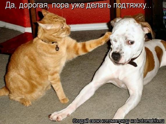 Котоматрица: Да, дорогая, пора уже делать подтяжку...