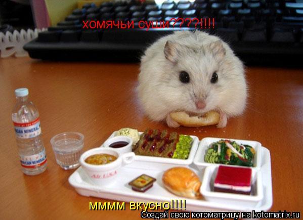 Котоматрица: хомячьи суши????!!!!  мммм вкусно!!!!