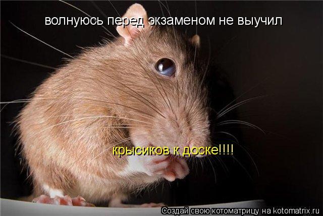 Котоматрица: волнуюсь перед экзаменом не выучил  крысиков к доске!!!!