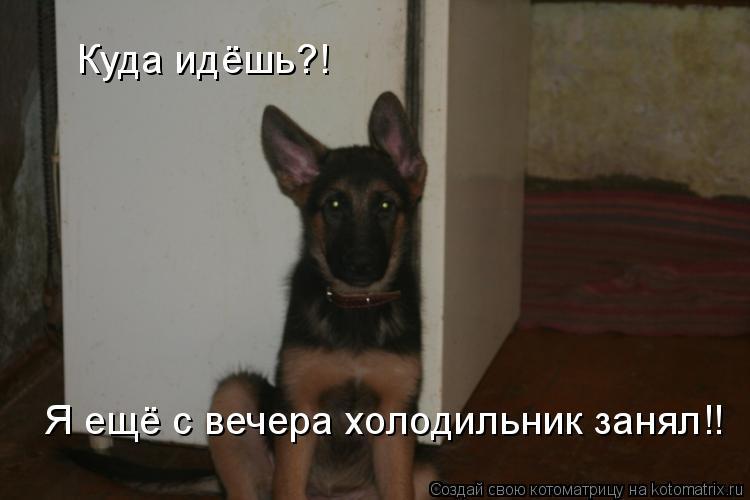 Котоматрица: Куда идёшь?! Я ещё с вечера холодильник занял!!
