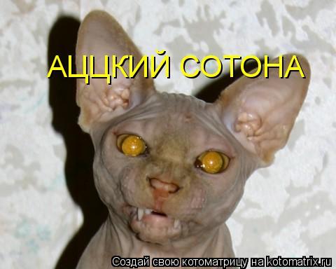 http://kotomatrix.ru/images/lolz/2009/08/13/340046.jpg