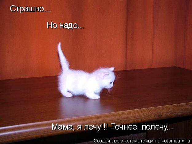 Котоматрица: Страшно... Но надо... Мама, я лечу!!! Точнее, полечу...