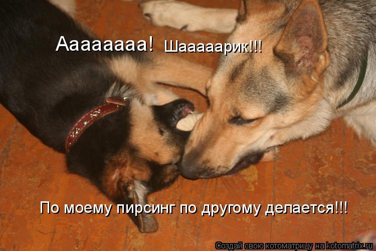 http://kotomatrix.ru/images/lolz/2009/08/13/340053.jpg