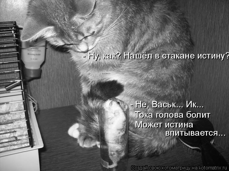 Котоматрица: - Не, Васьк... Ик... Тока голова болит Может истина  впитывается... - Ну, как? Нашёл в стакане истину?