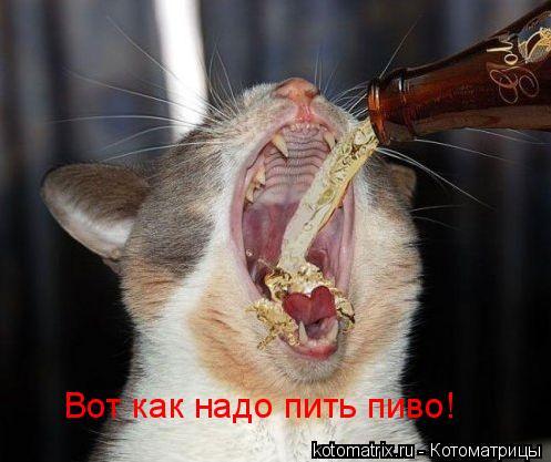 http://kotomatrix.ru/images/lolz/2009/08/13/340072.jpg