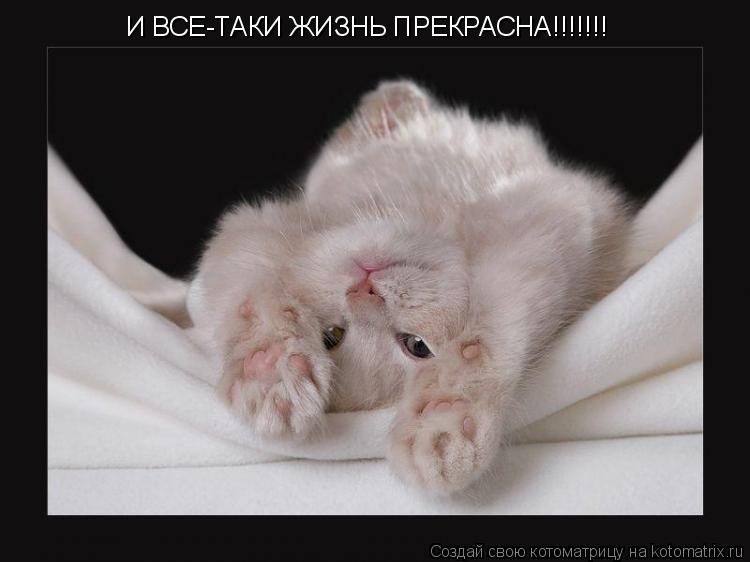Котоматрица: И ВСЕ-ТАКИ ЖИЗНЬ ПРЕКРАСНА!!!!!!!