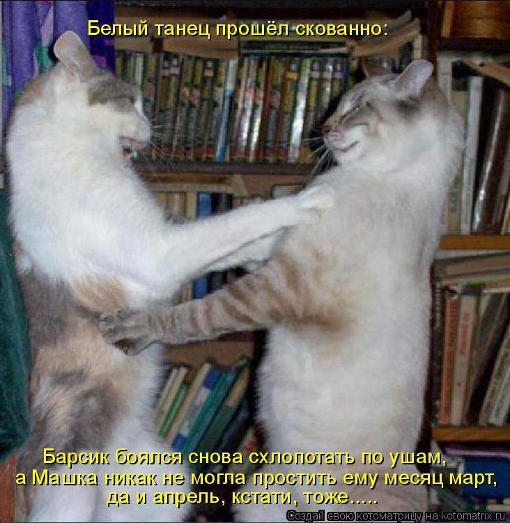 Котоматрица: Белый танец прошёл скованно: Барсик боялся снова схлопотать по ушам, да и апрель, кстати, тоже..... а Машка никак не могла простить ему месяц м