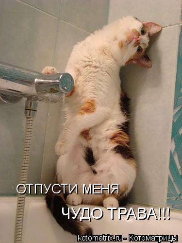 Котоматрица: ОТПУСТИ МЕНЯ  чудо трава!!! ОТПУСТИ МЕНЯ ЧУДО ТРАВА!!!