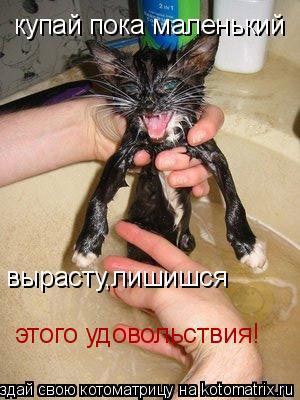 Котоматрица: купай пока маленький вырасту,лишишся этого удовольствия!