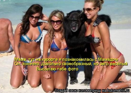 Котоматрица: Мама, тут на курорте я познакомилась с Мамедом  Он, конечно, довольно своеобразный, но зато весёлый Высылаю тебе фото