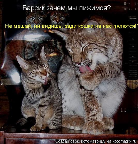 Котоматрица: Барсик зачем мы лижимся? Не мешай, ни видишь, зади кошки на нас пялются!?