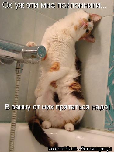 Котоматрица: Ох уж эти мне поклонники... В ванну от них прятаться надо!