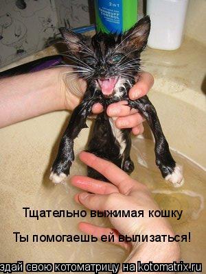Котоматрица: Тщательно выжимая кошку Ты помогаешь ей вылизаться!