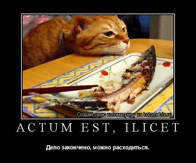Котоматрица: Actum est, ilicet Дело закончено, можно расходиться.