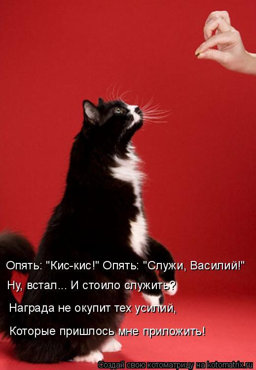 """Котоматрица: Опять: """"Кис-кис!"""" Опять: """"Служи, Василий!"""" Ну, встал... И стоило служить? Награда не окупит тех усилий, Которые пришлось мне приложить!"""