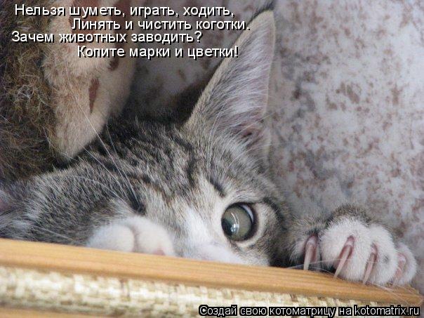 Котоматрица: Нельзя шуметь, играть, ходить,  Линять и чистить коготки. Зачем животных заводить? Копите марки и цветки!
