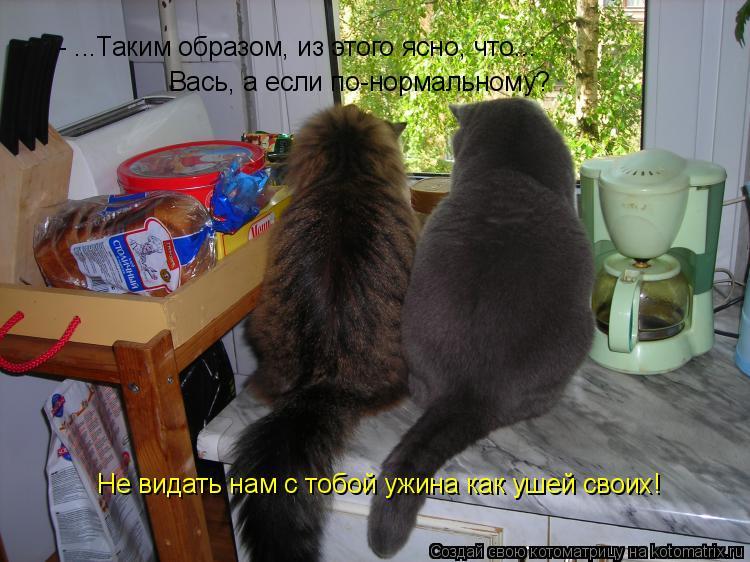 Котоматрица: - ...Таким образом, из этого ясно, что... Вась, а если по-нормальному? Не видать нам с тобой ужина как ушей своих!