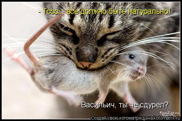 Котоматрица: - Васильич, ты че сдурел? - Тссс... все должно быть натурально!