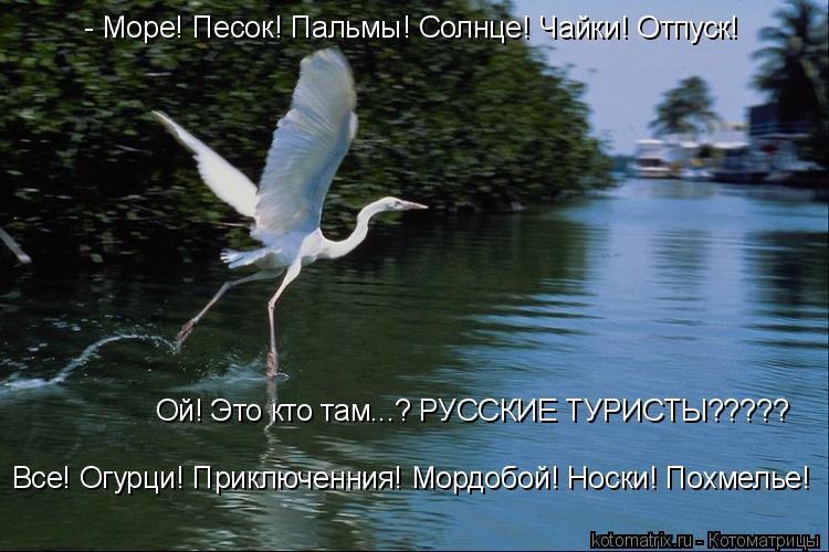 Котоматрица: - Море! Песок! Пальмы! Солнце! Чайки! Отпуск! Ой! Это кто там...? РУССКИЕ ТУРИСТЫ????? Все! Огурци! Приключенния! Мордобой! Носки! Похмелье!