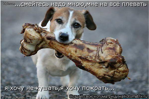 Котоматрица: ...смейтесь надо мною,мне на всё плевать я хочу не кушать,я хочу пожрать...