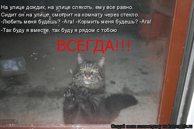Котоматрица: На улице дождик, на улице слякоть, ему все равно. Сидит он на улице, смотрит на комнату через стекло. -Любить меня будешь? -Ага! -Кормить меня б