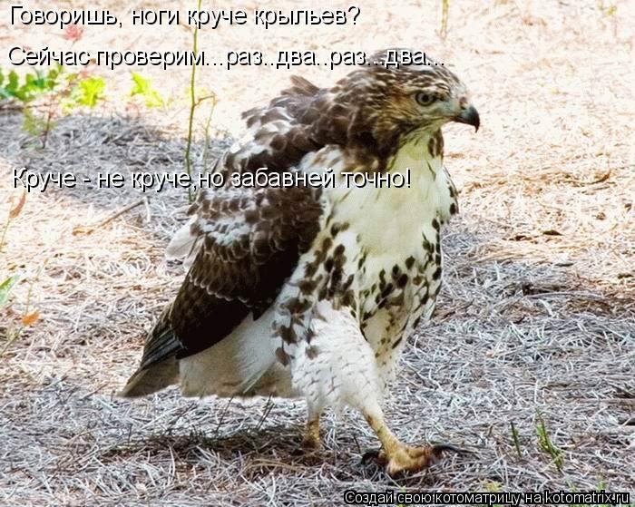 Котоматрица: Говоришь, ноги круче крыльев? Сейчас проверим...раз..два..раз...два... Круче - не круче,но забавней точно!