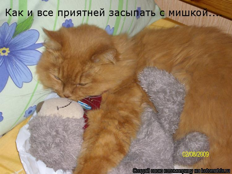 Котоматрица: Как и все приятней засыпать с мишкой....