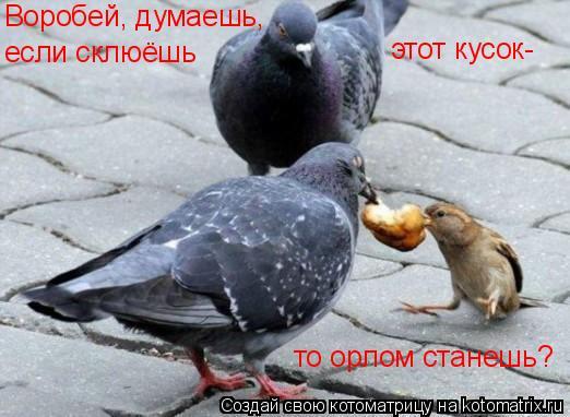 Котоматрица: Воробей, думаешь, если склюёшь этот кусок- то орлом станешь?