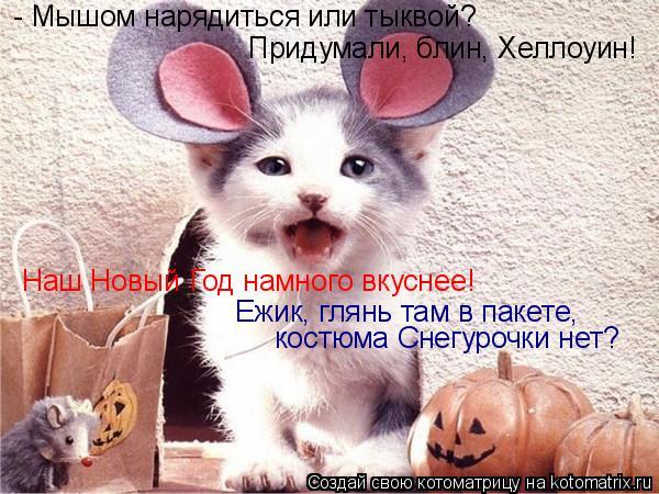 Котоматрица: - Мышом нарядиться или тыквой? Придумали, блин, Хеллоуин! Наш Новый Год намного вкуснее! Ежик, глянь там в пакете, костюма Снегурочки нет?