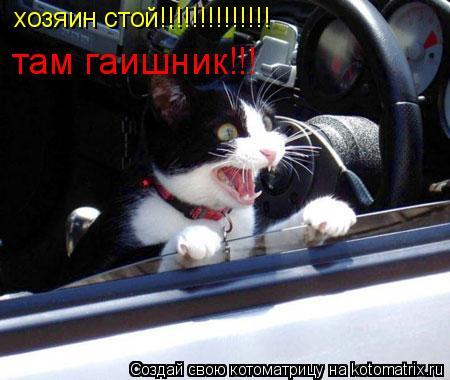Котоматрица: хозяин стой!!!!!!!!!!!!!! там гаишник!!!